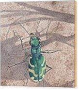 Tiger Beetle Wood Print