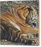 Tiger Behavior Wood Print