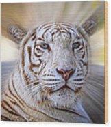 Tiger Blur Wood Print