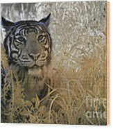 Tiger In Infrared Wood Print