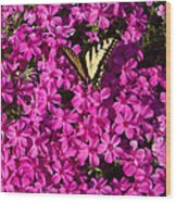 Tiger In The Phlox 5 Wood Print