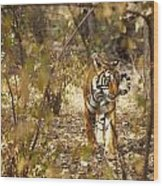 Tiger In The Undergrowth At Ranthambore Wood Print