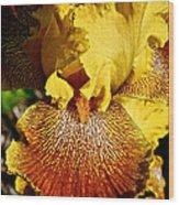 Tiger Iris Wood Print