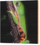Tiger Leg Monkey Frog Wood Print