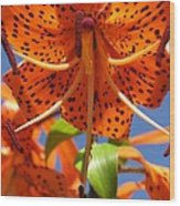 Tiger Lily Close Up Wood Print