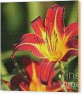 Tiger Lily0239 Wood Print