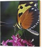 Tiger Longwing Butterfly Wood Print