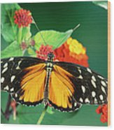 Tiger Longwing Heliconius Hecale Wood Print