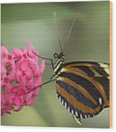 Tiger Longwing On Flower Wood Print