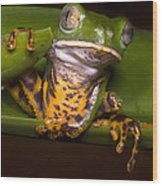 Tiger-stripe Monkey Frog Wood Print