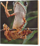 Tiger Striped Leaf Frog Waving Wood Print