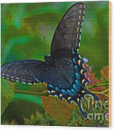 Tiger Swallowtail Butterfly Female Wood Print