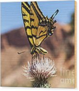 Tiger Swallowtail Butterfly In The Desert Wood Print