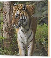 Tiger Walking Wood Print
