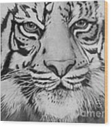 Tiger's Eyes Wood Print