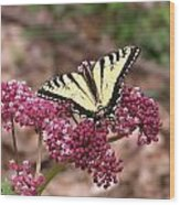 Tigertale Butterfly Wood Print