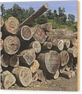 Timber At A Logging Area, Danum Valley Wood Print