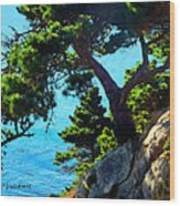 Timber Cove In Sonoma Coast Wood Print