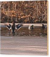 Time For Me To Fly Wood Print by LeeAnn McLaneGoetz McLaneGoetzStudioLLCcom