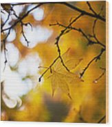 Time Of The Season Wood Print