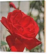 Timeless Red Beauty Wood Print