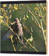 Tiny Bird In Wild Lettuce  Wood Print