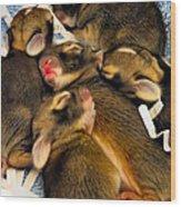 Tiny Bunnies Wood Print