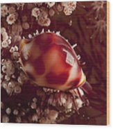 Tiny Cowrie Shell On Dendronephtya Soft Wood Print
