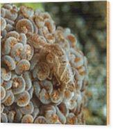 Tiny Cryptic Brown And Grey Shrimp Wood Print