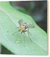 Tiny Fly Wood Print