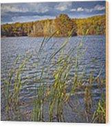 Tiny Island On Hall Lake No 0086 Wood Print