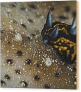 Tiny Nudibranch On Sea Cucumber Wood Print