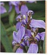Tiny Purple Iris Wood Print