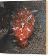 Tiny Red Yellow And White Cowrie Wood Print