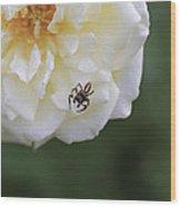 Tiny Spider  Wood Print