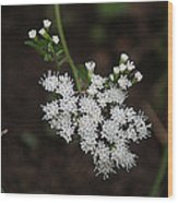 Tiny Wild Flowers Wood Print