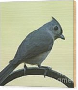 Titmouse On A Perch Wood Print