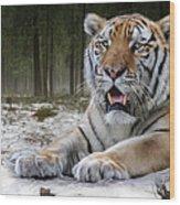TJ  Wood Print by Big Cat Rescue
