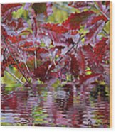 Tn Fall Water Wood Print