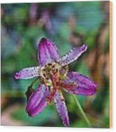 Toad Lilly 1 Wood Print