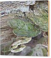 Toad Stool Wood Print