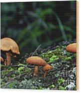 Toadstool Village Wood Print by Kaye Menner