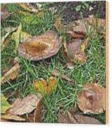Toadstools Blending In Wood Print