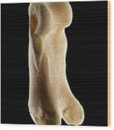 Toe Bone Of A Bobcat Lynx Rufus Wood Print
