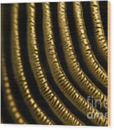 Tokay Gecko Lamellae Wood Print