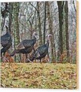 Tom Turkeys All In A Row 1 Wood Print