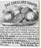 Tomato Advertisement, 1889 Wood Print