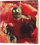 Tomato Creature Wood Print