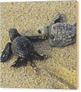 Tommy And Timmy Turtle Wood Print