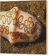 Flamingo Tongue On A Plate Wood Print